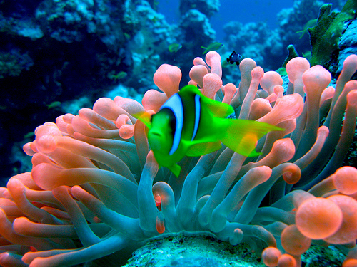 http://www.superegipt.ro/wp-content/uploads/2010/08/Diving_Marea_Rosie.jpg