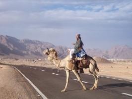 Camila traversand soseaua Luxor-al-Hurghada