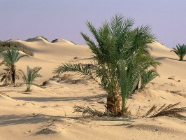 imagine Oaza Dakhla Egipt.