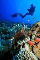 Diving Xtreme Adventure